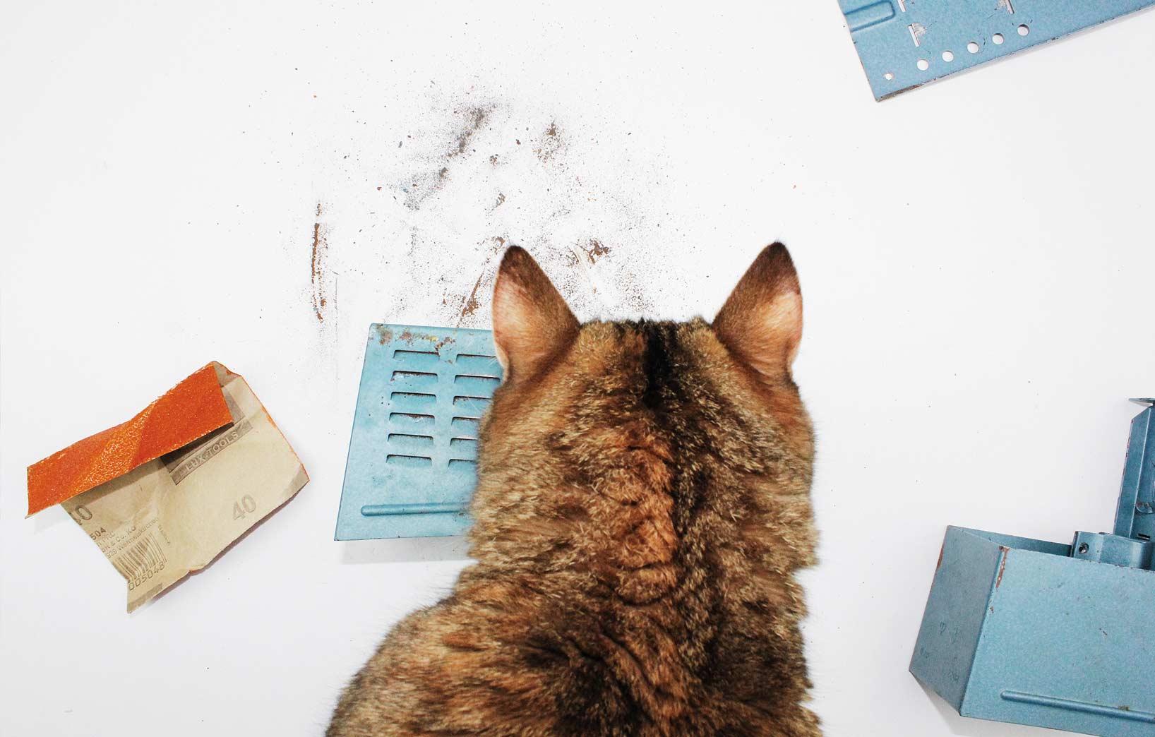 кошка и детали