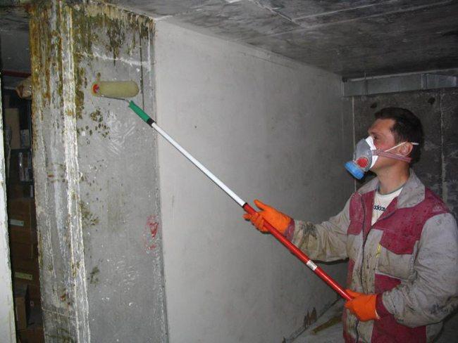 Плесень в погребе: как избавиться? как удалить сырость и грибок под домом — как вывести и уничтожить