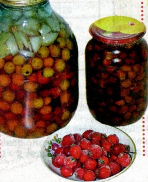 Заготовка боярышника на зиму в домашних условиях: сушка, хранение и использование ягод